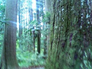 神社の木々写真