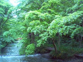神社前の川写真